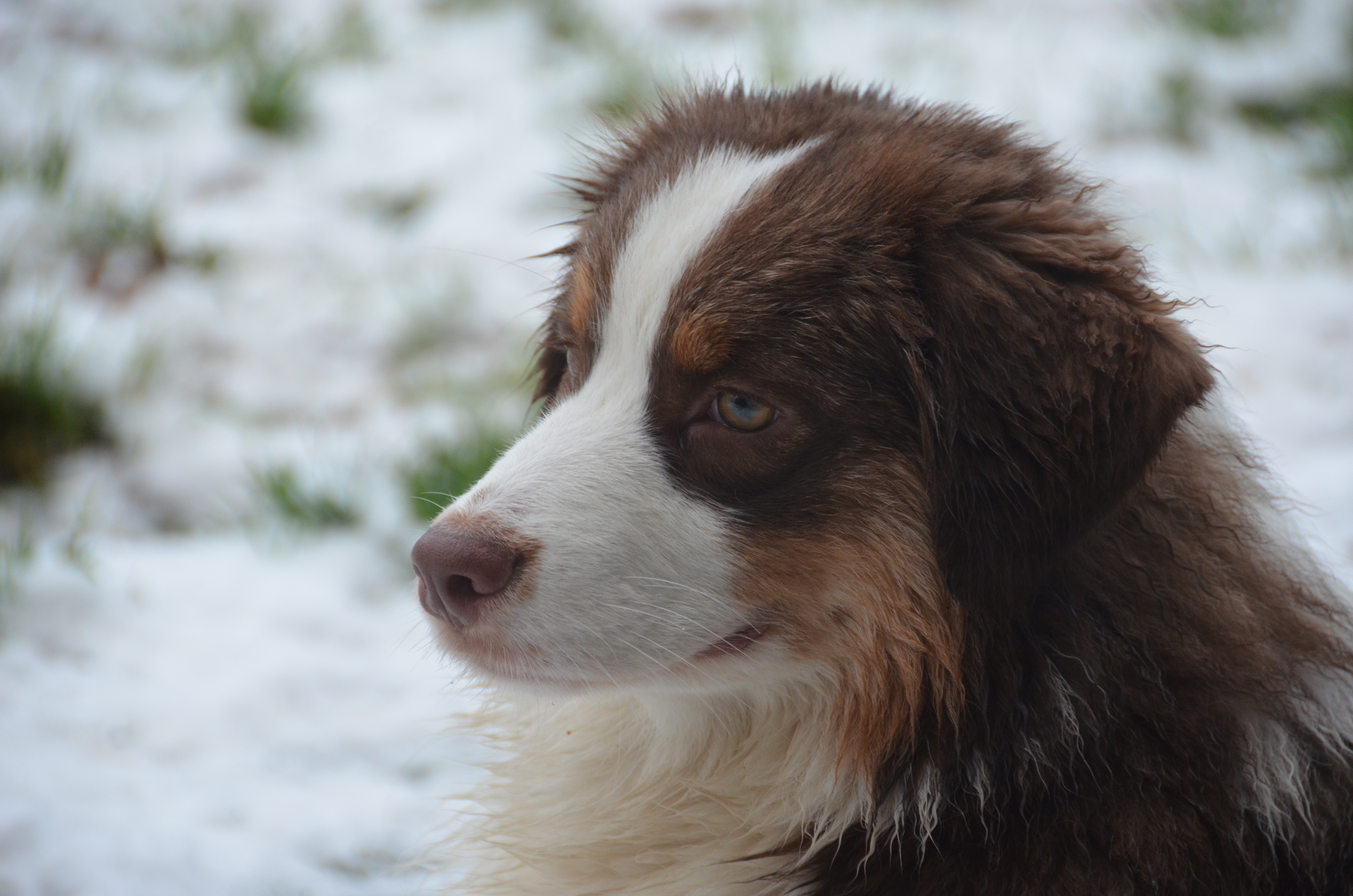Eerste sneeuw Bliss 048