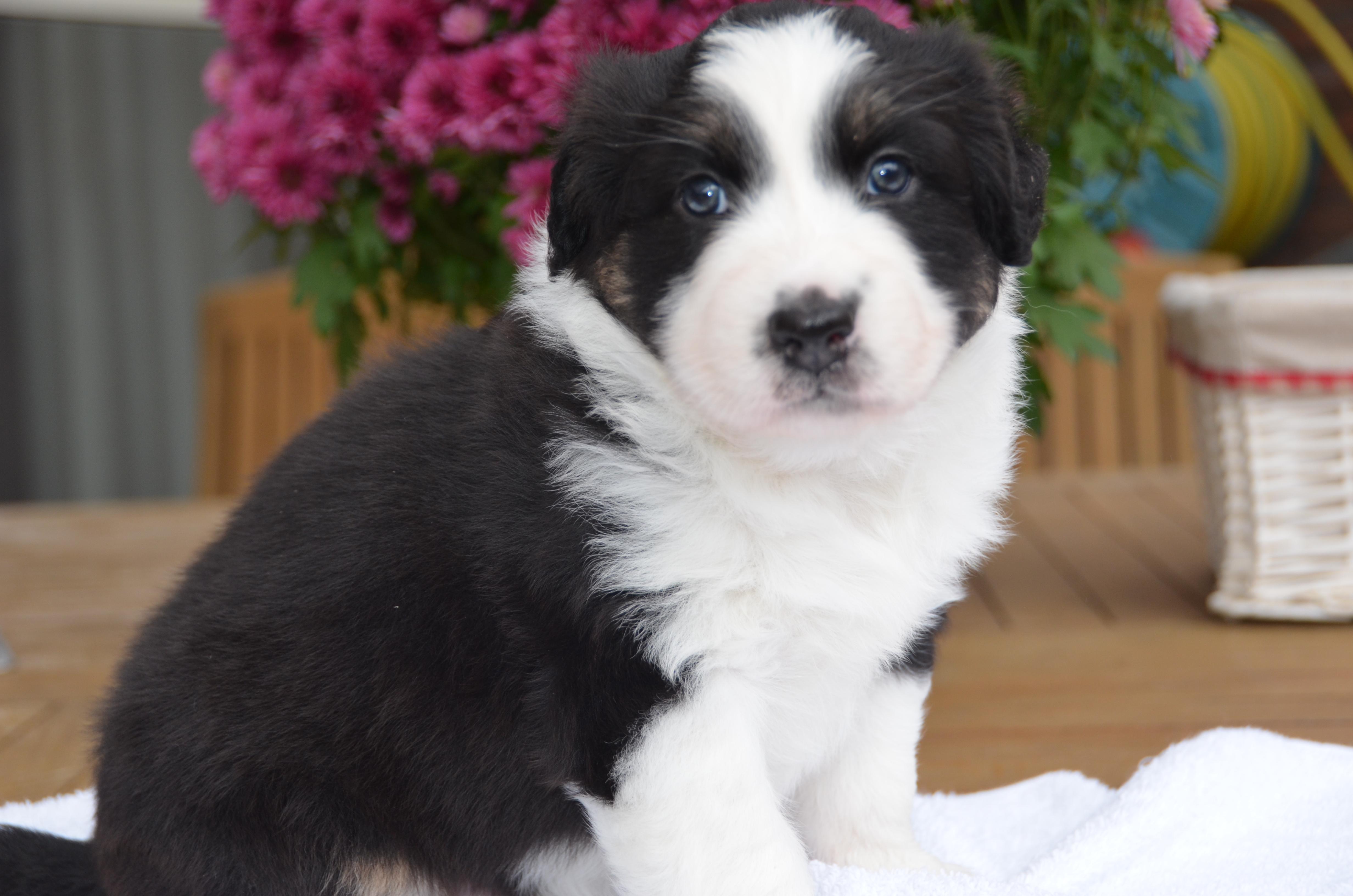 Gina pups 4,5 weekjes 017